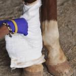 Horse Leg Injury Treatment