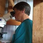 Deb evaluating semen for motility and morphology